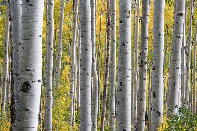 trees-690727_640